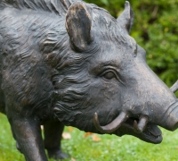 boar-face-horizontal-web