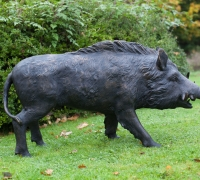 boar-side-view-web