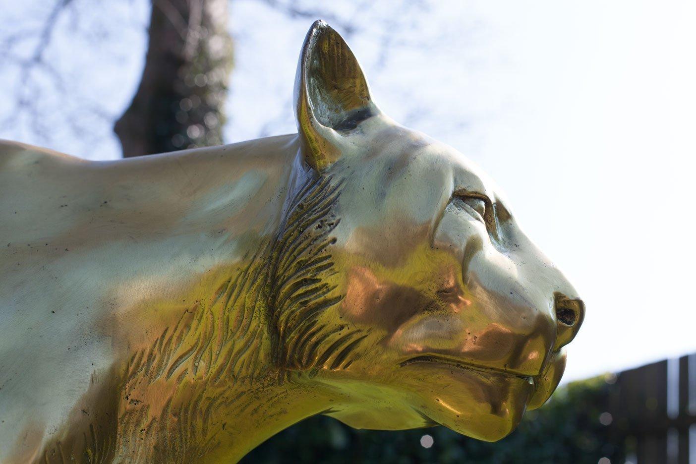 bronze-cougar–5