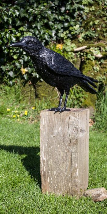 bronze crow