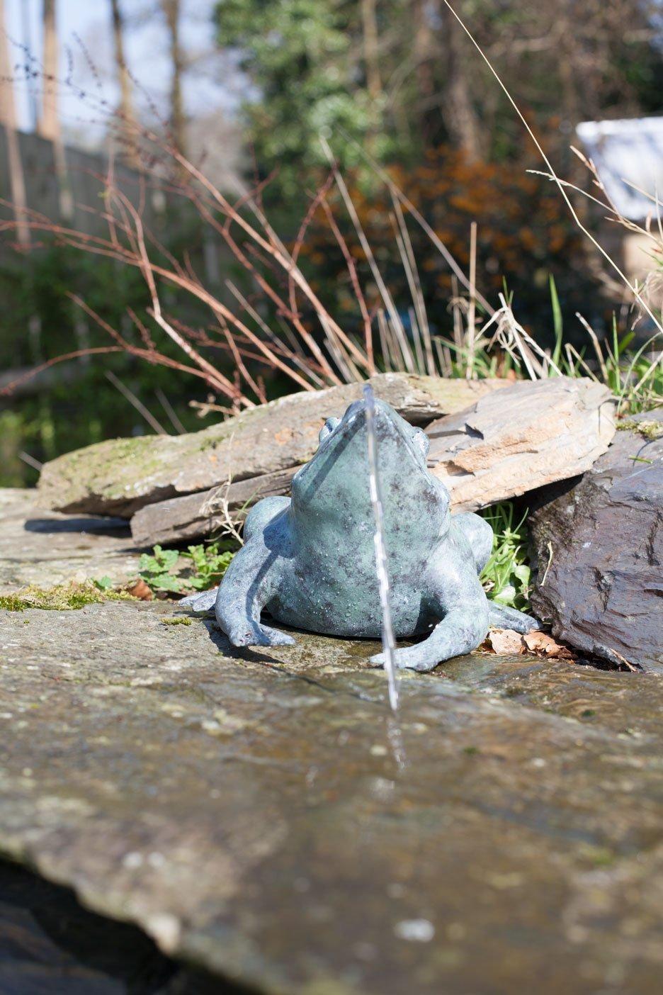 bronze-frog-8