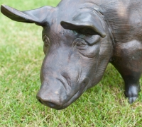 bronze-pig-1