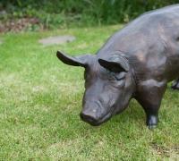 bronze-pig-2
