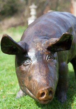 bronze pig standing