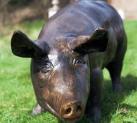 bronze pig2