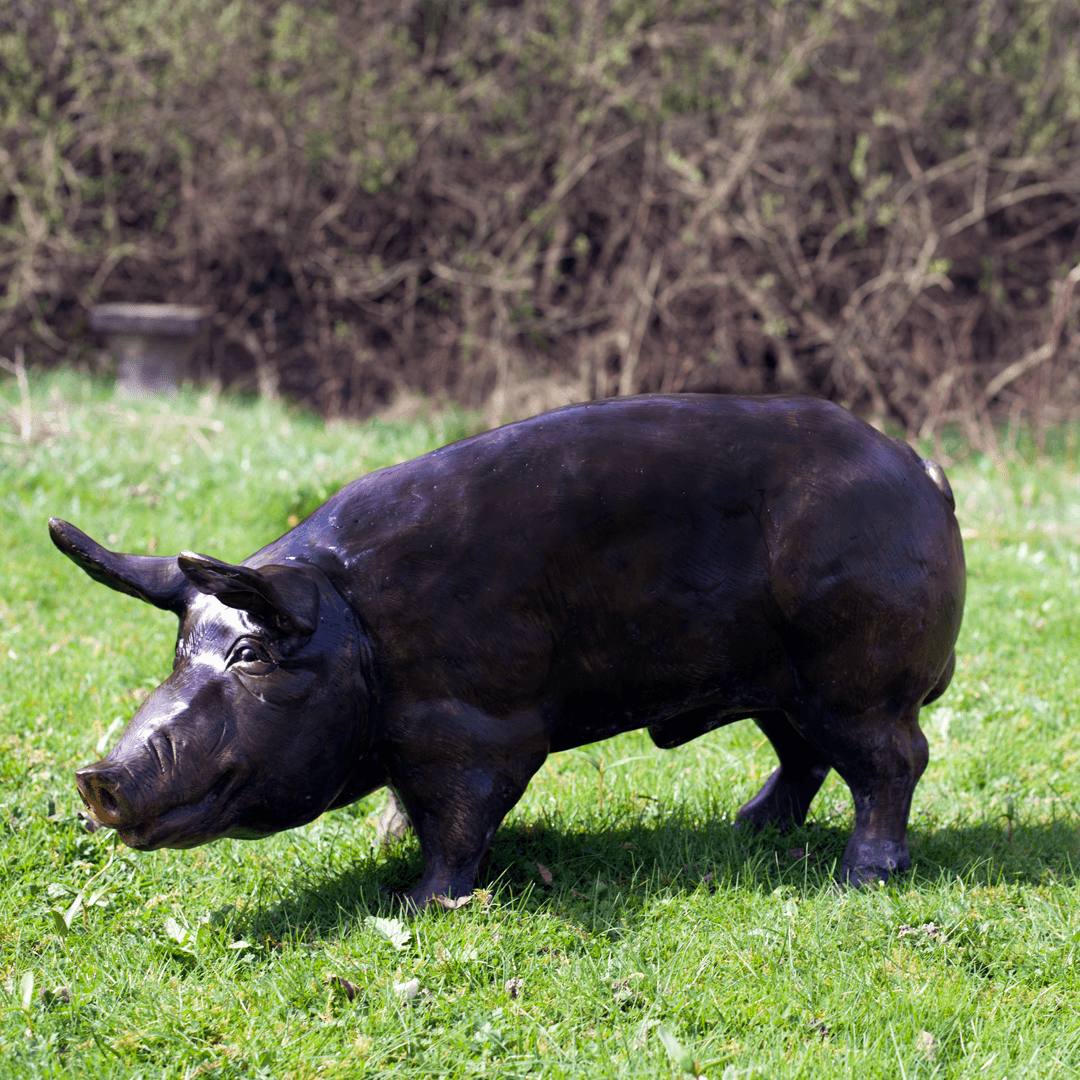 bronze-pig5