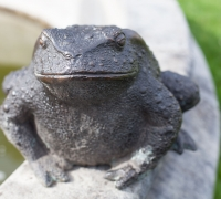 bronze-toad-face