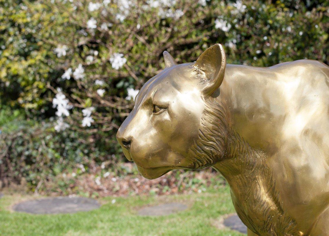 cougar-large