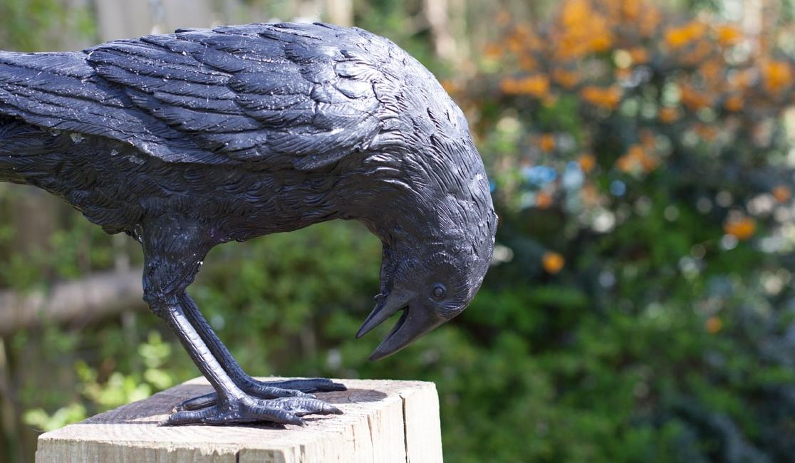 crow-large