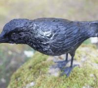 crow2-rav03-2