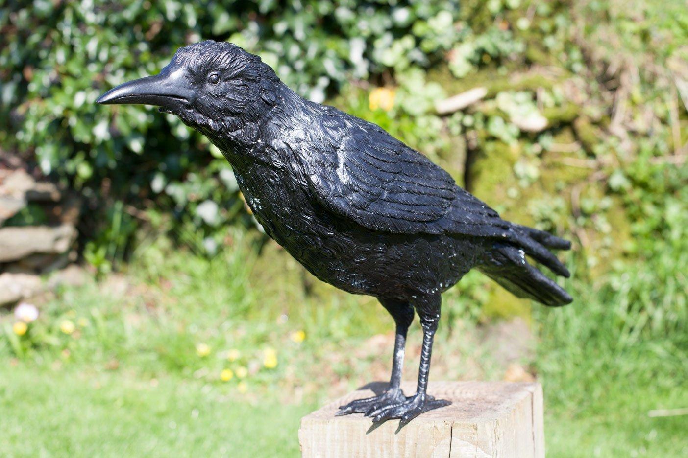 crow2—rav03–4