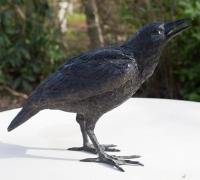 crow4-rav01—1