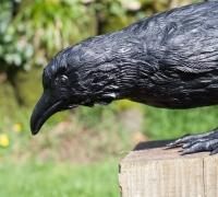 crow5—rav05-4
