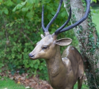 gold-stag-close-up