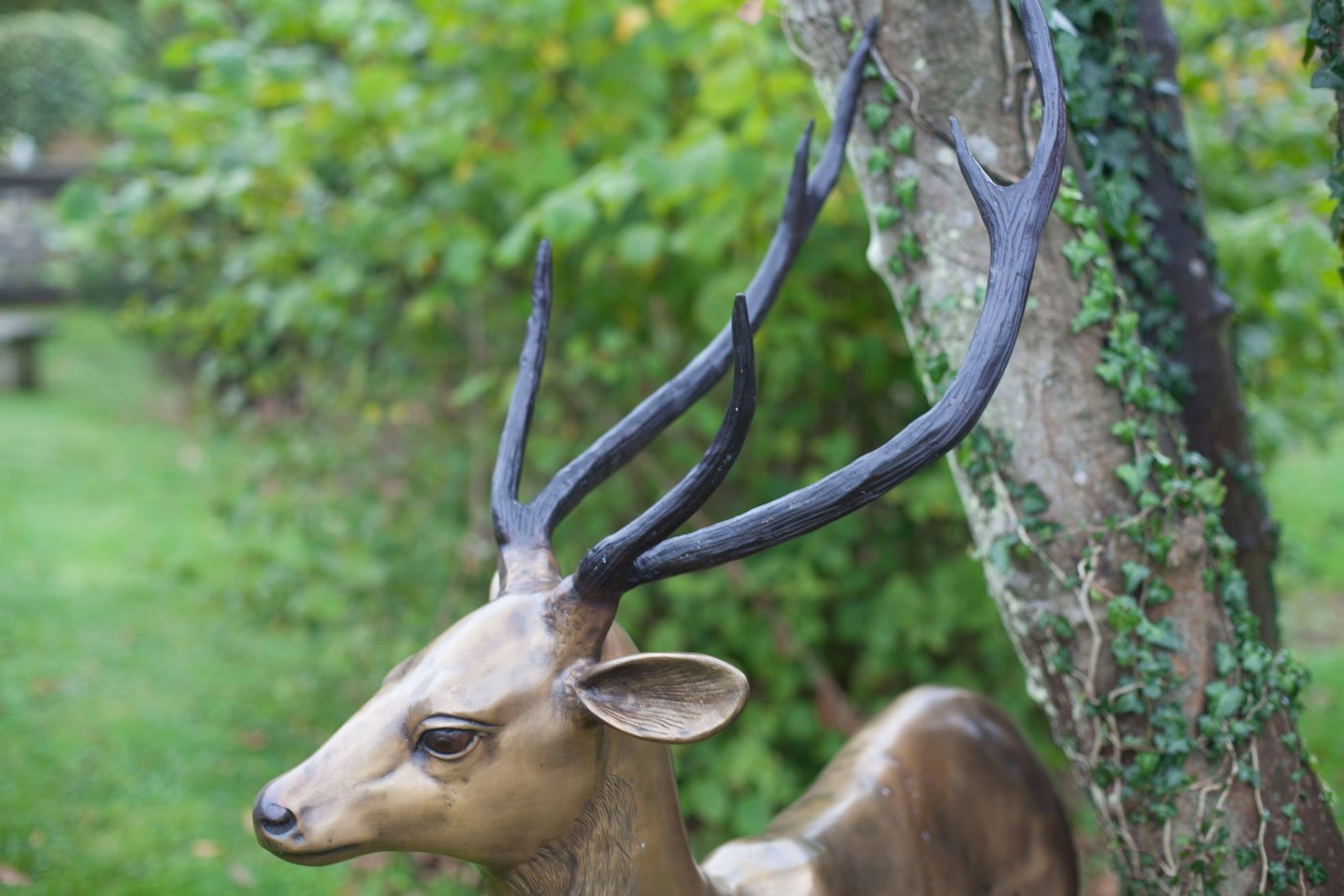 gold-stag-close-up-head