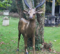 gold-stag-face-on