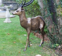 gold-stag-side-distance