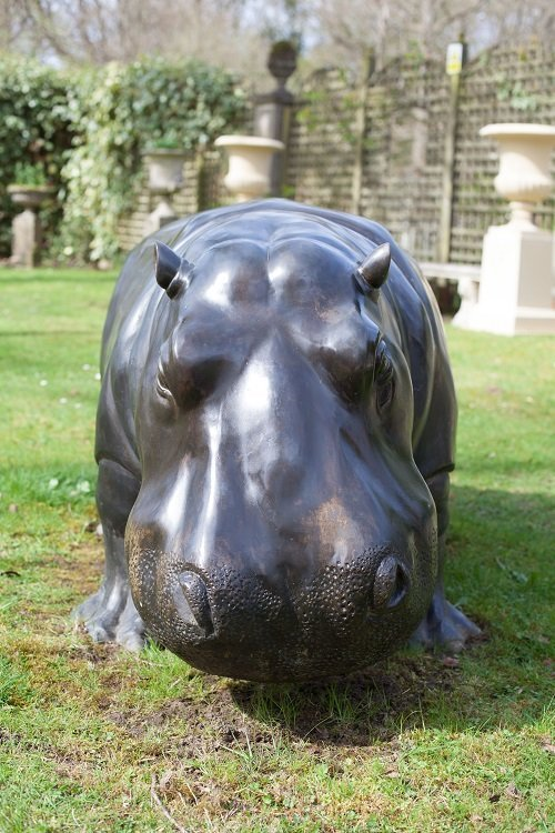 hippo-head-on gallery