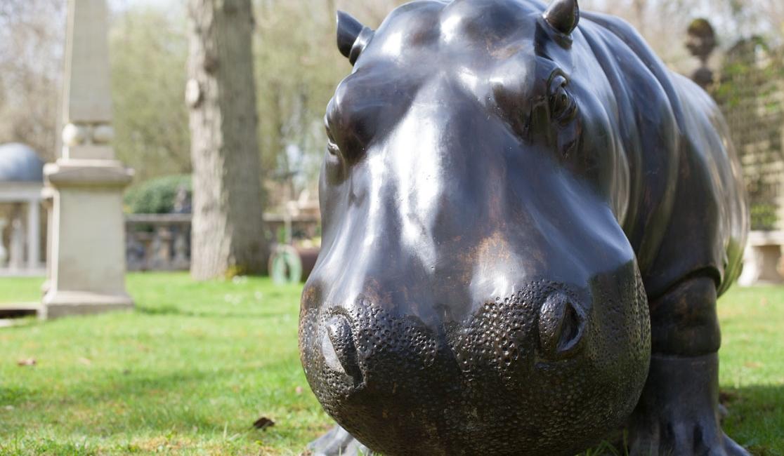 hippo-large