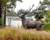 large-stag-display